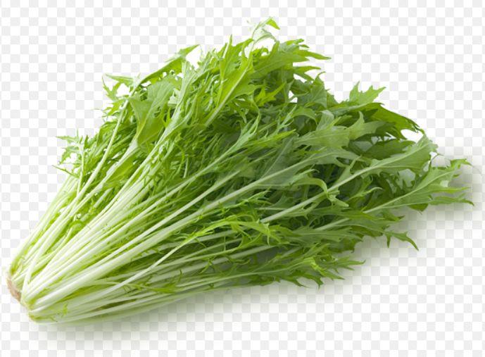 水菜のイラスト画像